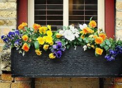 Calling All Gardeners … It's the Window Box Challenge!
